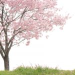 乃木坂46・白石麻衣は東京ドーム公演で卒業なのか?